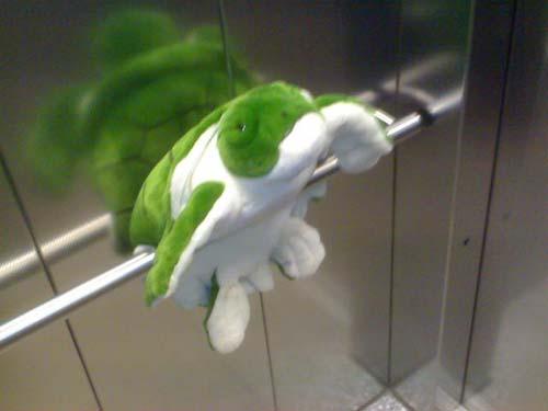 Fehler bei der Haustierhaltung: Schildkröte im Aufzug