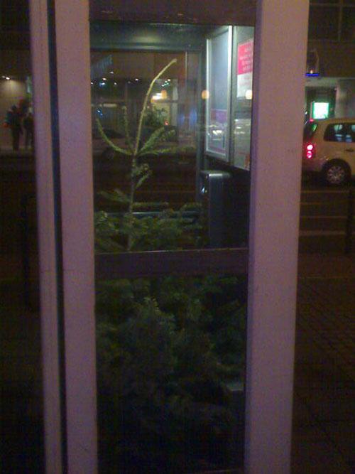 Weihnachtsbaum in Telefonzelle
