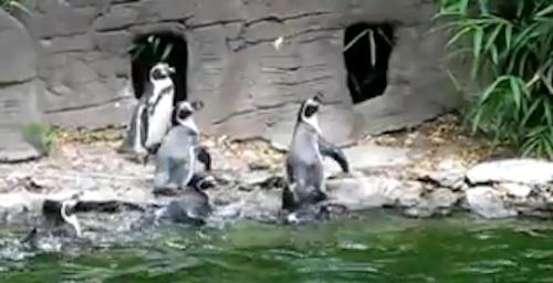 Pinguine jagen Schmettering