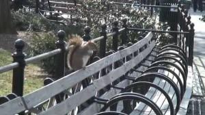 Eichhörnchen auf Parkbank