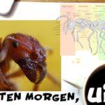 Interessante und lustige Fakten über Ameisen