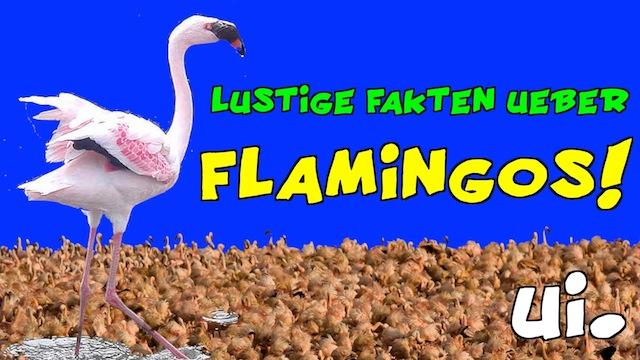 Lustige Fakten über Tiere: Flamingos
