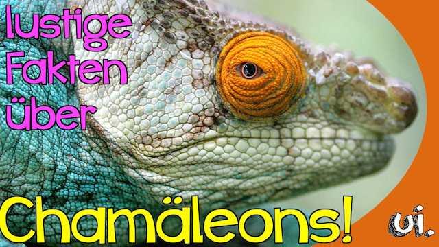 lustige Fakten über Chamäleons